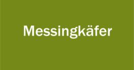 Mengenempfehlung und Anleitung für Messingkäfer
